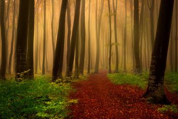 Foggy forest fairytale