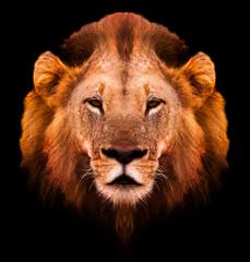 Wall Mural - Lion Portrait