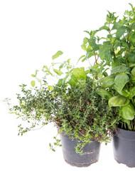 Herb Garden isolated on white