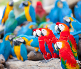 Parrots sitting on a tree