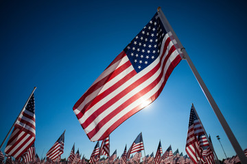A dispaly of American flags with a sky background