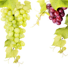 white and pink grape isolated
