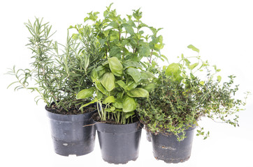 Herb Garden isolated on white