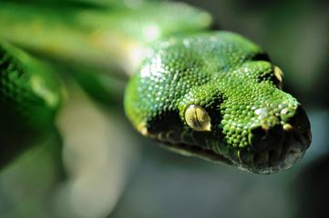 Serpente verde