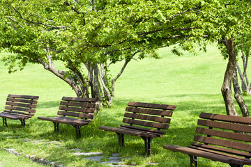 benches in a beautiful park