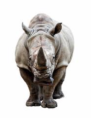 rhino on white background