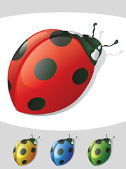 Lady Bug Detailed Colors