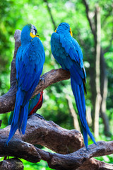 two of beautiful parrots