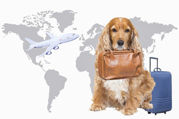 Dog with suitcase in her mouth ready to go on trip