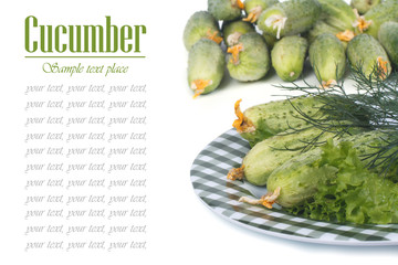 Fresh cucumbers, lettuce and dill on a plate isolated