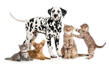 pets animals group collage for veterinary or petshop isolated Wall mural