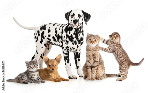 Wall mural pets animals group collage for veterinary or petshop isolated