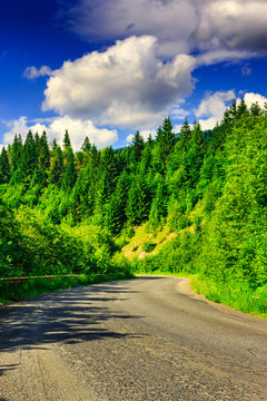 route through the mountains to the pine forest on a summer eveni