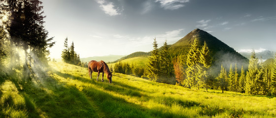 Fototapeta Horse on a summer pasture in the mountains obraz