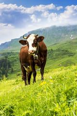 Aluminium Prints Cow Alpine cow