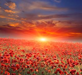 Obraz poppy field on sunset - fototapety do salonu