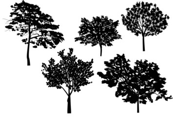 five trees collection isolated on white