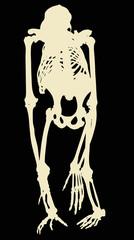 yellow chimpanzee skeleton on black