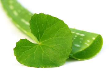 Medicinal aloe vera with thankuni leaves