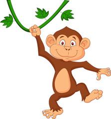 Cute monkey hanging