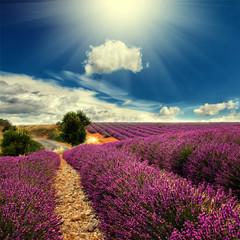 Wall Mural - lavender field