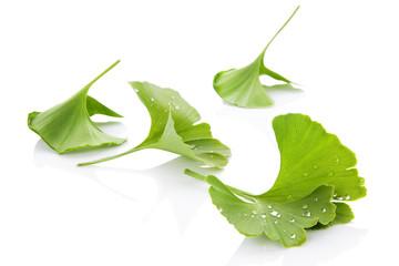 Ginkgo leaves.