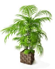 Palm Tree in 3d