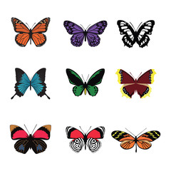 Vector colorful butterfly set