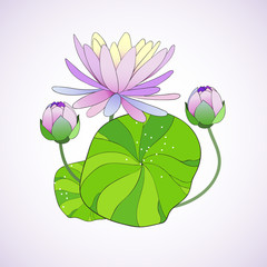 Beautiful background with hand drawn water lily.