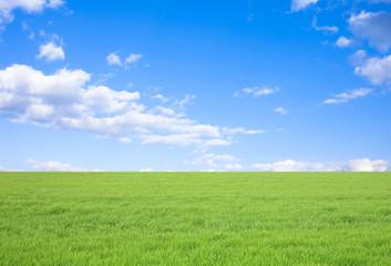 Fototapeta 草原と青空 obraz