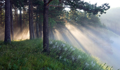 the rays of the sun in the mist
