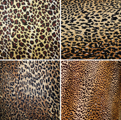 Wild Animal pattern collage