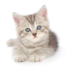 Wall Mural - Kitten on a white background