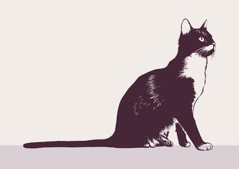 Black-white cat