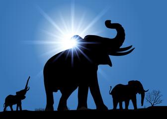 Elephant_Rayons de soleil