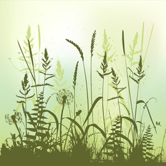 Real grass silhouette, meadow during summertime