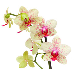yellow and red orchid flowers