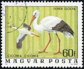 stamp printed in Hungary shows White Stork