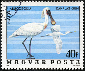 stamp printed in Hungary shows Spoonbills (Platalea Leucorodia)