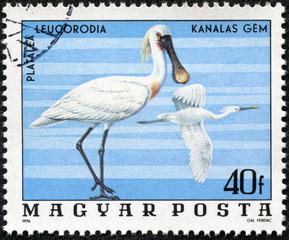 stamp printed in Hungary shows Spoonbills (Platalea Leucorodia)