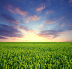 Deurstickers Meloen Green field and sunrise sky as background