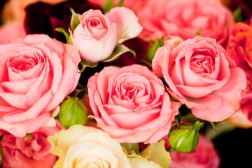 schöne frische bunte rosen im sommer auf dem markt