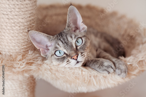 where to buy tidy cat litter