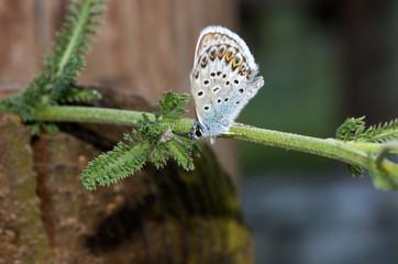 Farfalla su ramo verde
