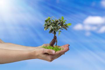 Baum in den Händen