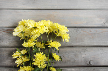 Yellow chrysanthemum on wooden background. Copy space