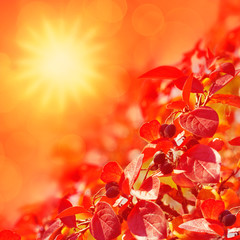 Colorful autumn background with the sun and red leaves and berri