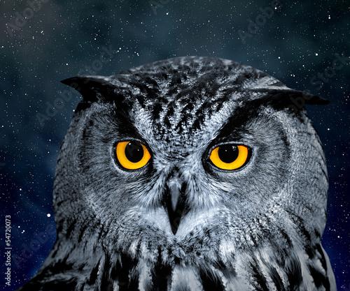 Wall mural Eagle Owl, Bubo bubo