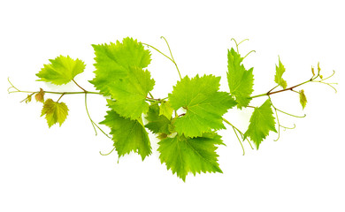 banch of vine leaves isolated on white Wall mural