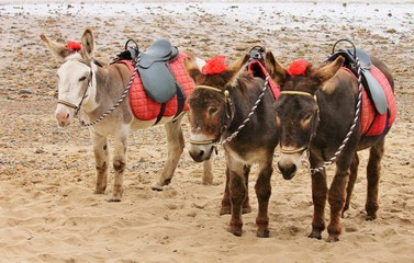 donkeys ride on beach for rides at the seaside stock, photo, photograph, image, picture